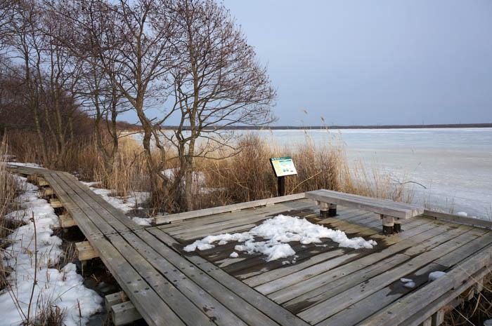 冬のウトナイ湖