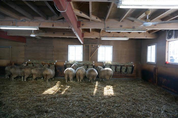 冬の羊ヶ丘展望台