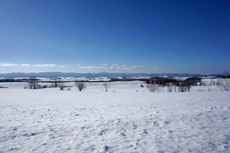 雪の美瑛の丘