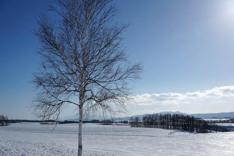 雪の新栄の丘