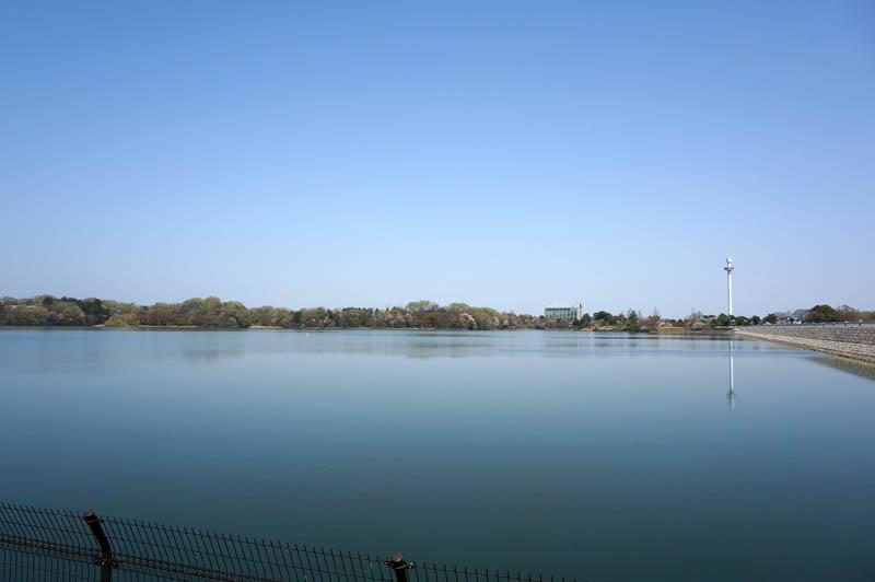 春の多摩湖