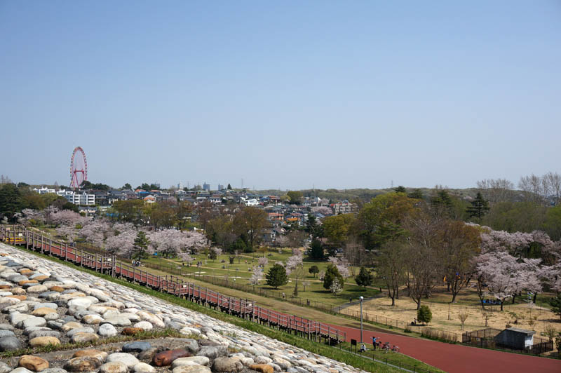 春の狭山公園