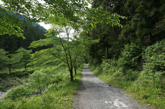 武甲山浦山口林道