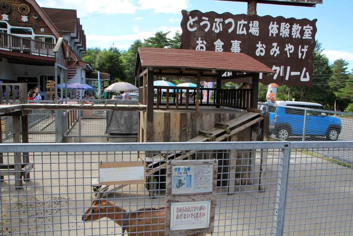 浅間牧場茶屋どうぶつ広場