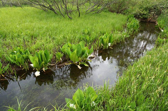 尾瀬ヶ原を流れる小川