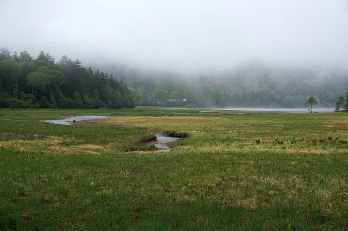 尾瀬沼浅湖湿原