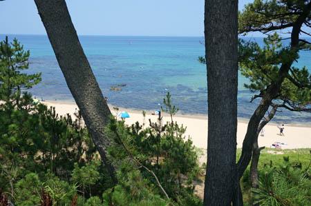 琴引浜の松林