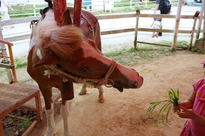 淡路島牧場ポニー乗馬体験