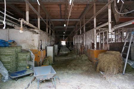 淡路島牧場牛舎内部