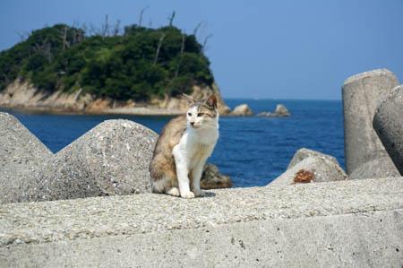 港でくつろぐネコ