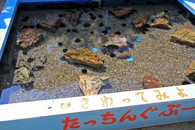 桂浜水族館たっちんぐぷーる