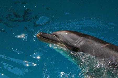 桂浜水族館のイルカ