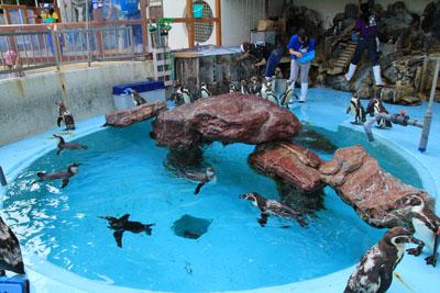 桂浜水族館ペンギンプール