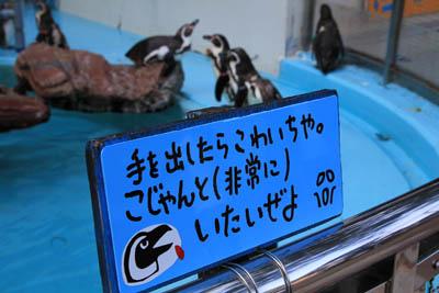 桂浜水族館ペンギン