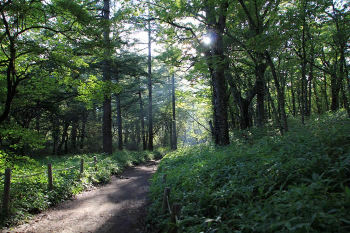 朝の奥日光の森