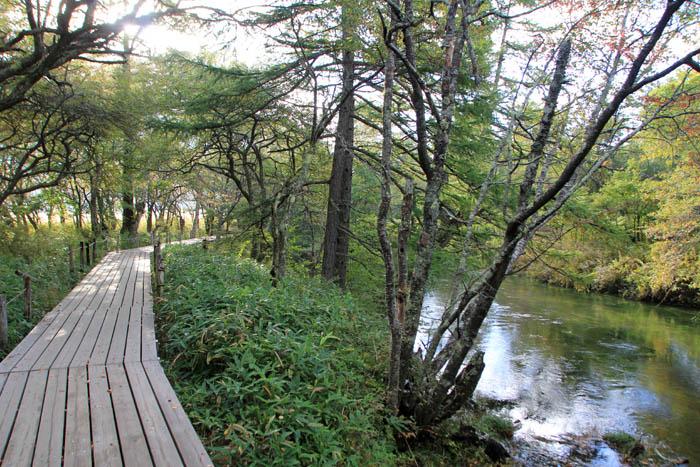 湯川沿いの戦場ヶ原の遊歩道