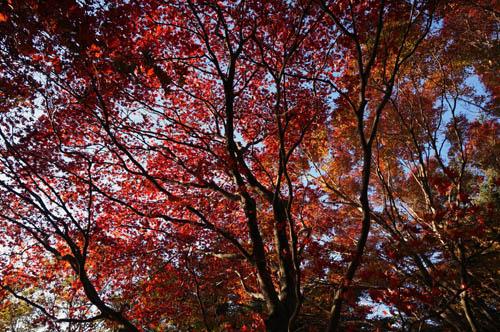 摩耶山の紅葉