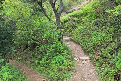 別子銅山登山道