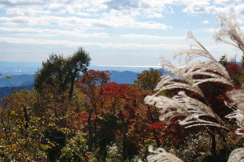 紅葉の高尾山と相模湾