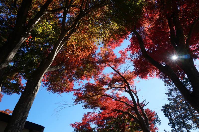 秋の高尾山紅葉台