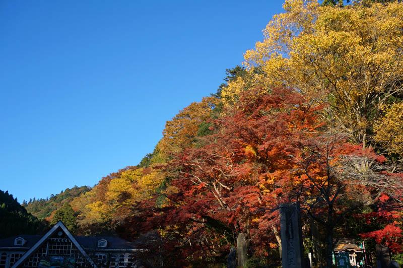 高尾山ケーブルの紅葉