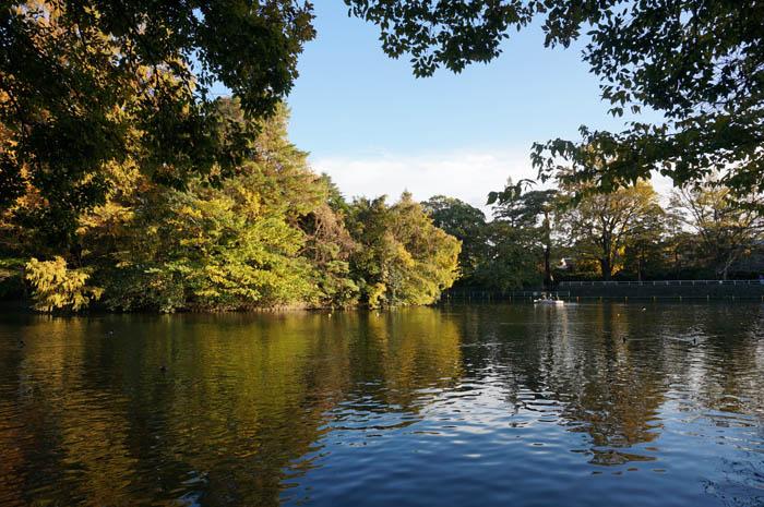 武蔵関公園富士見池