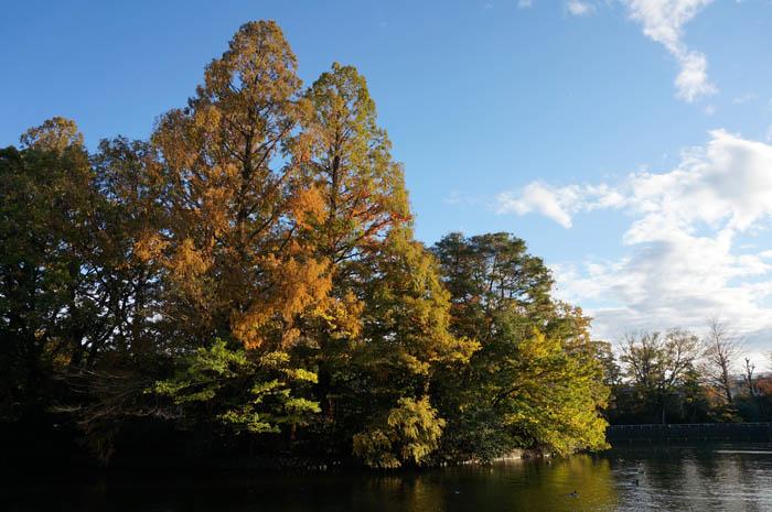 秋の武蔵関公園