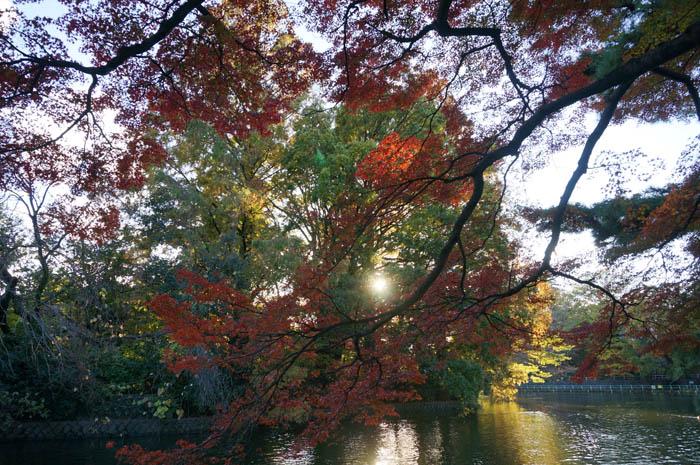 武蔵関公園の紅葉