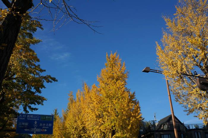 高尾駅付近の甲州街道銀杏並木