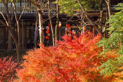 道の駅フレッシュパークからりの紅葉