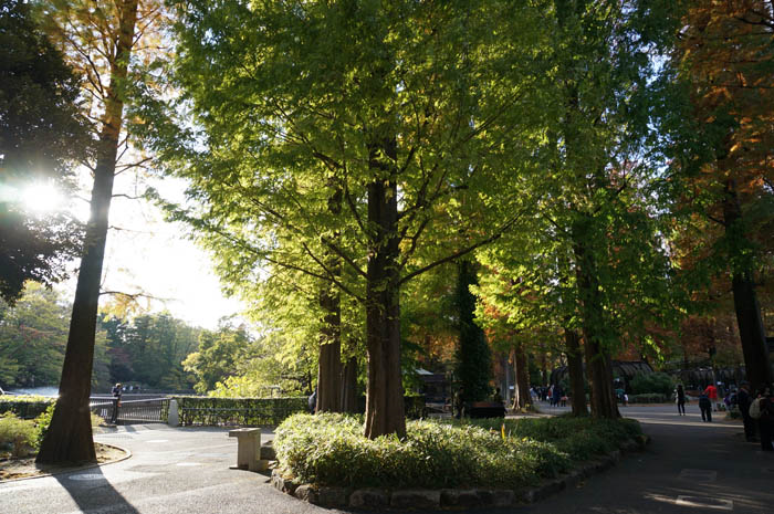 井の頭自然文化園分園