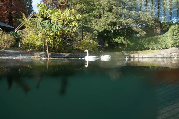 井の頭自然文化園水生物園