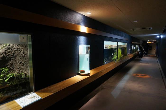 井の頭自然文化園水生物園水生物館