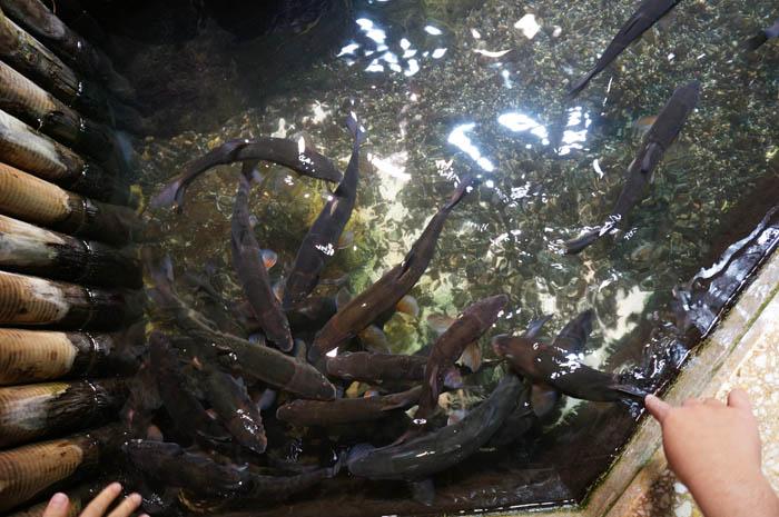 井の頭自然文化園水生物館