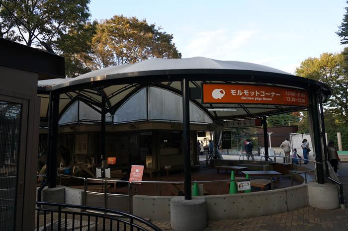 井の頭自然文化園モルモットコーナー