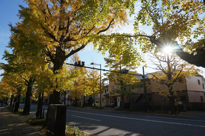 秋の甲州街道銀杏並木