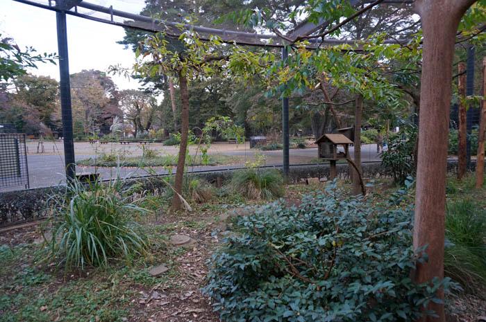 井の頭自然文化園リスの小径