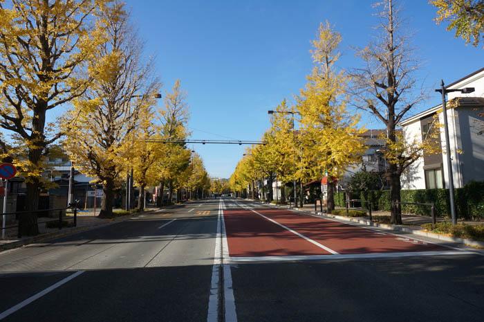 黄葉の甲州街道銀杏並木