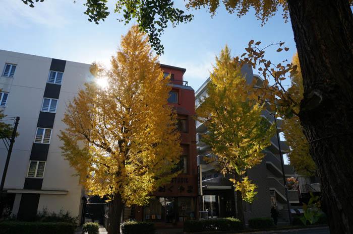 甲州街道銀杏並木の黄葉