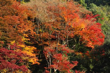紅葉の白滝公園