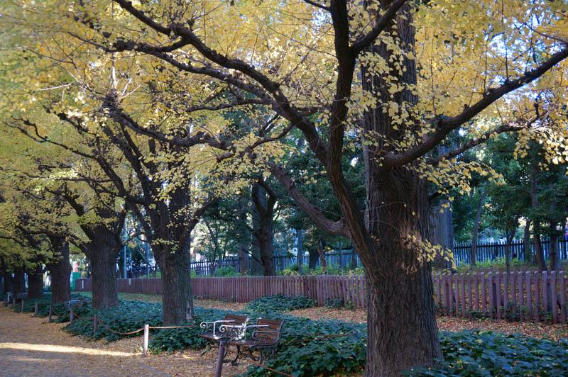 秋の明治神宮外苑銀杏並木道