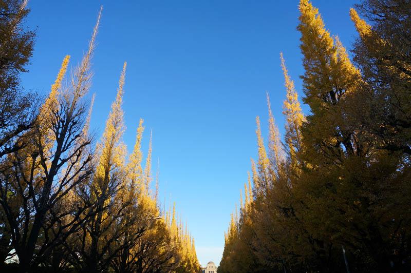 明治神宮外苑いちょう並木黄葉