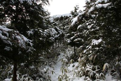 冬の石墨山登山口