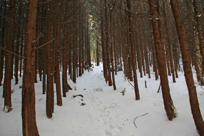 雪の水の元への登山道