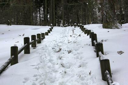 大雪の上林森林公園