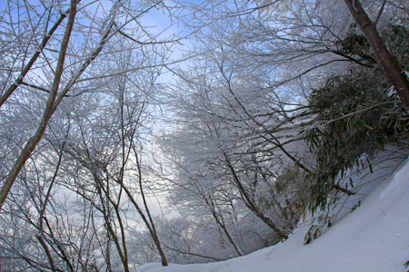 皿ヶ嶺の霧氷