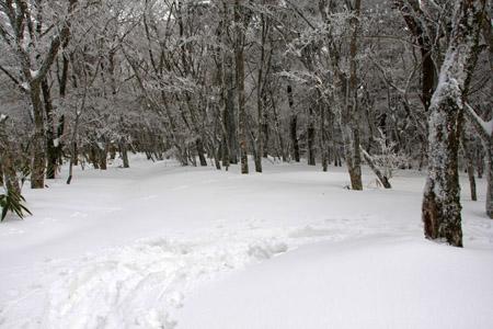 大雪の皿ヶ嶺