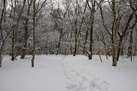 皿ヶ嶺の雪の森