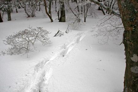 大雪皿ヶ嶺登山