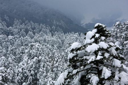 雪の大山の森
